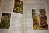 Aus Wald und Flur - Pflanzen unserer heimat