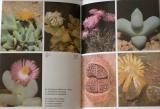 Gloser Jan - Kvetoucí kameny
