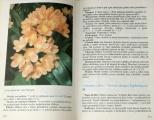 Hieke Karel - Pokojové rostliny