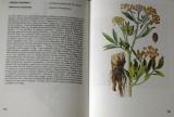 Jirásek, Starý, Severa - Kapesní atlas léčivých rostlin