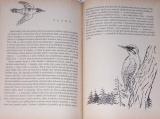 Vrba Jan - Ptačí svět