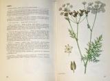 Korbelář, Endris - Naše rostliny v lékařství