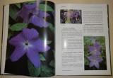 Kurpershoek Mineke - Kvetoucí pokojové rostliny