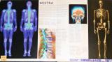 Diano Pierluigi - Atlas lidského těla