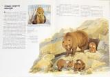 Hensel Wolfgang, Thiemeyer Hildburg - Severská zvířata