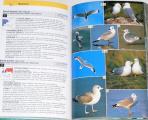 Ottův průvodce přírodou - Ptáci