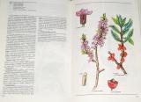 Velgosová M., Velgos Š. - Naše liečivé rastliny