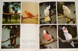 Chvapil Stanislav - Ptáci Austrálie