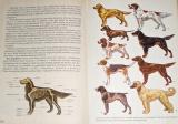 Světem zvířat III. díl - Domácí zvířata