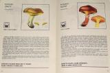 Rady pro sběr a nákup lesních plodů a hub
