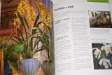 Pinske Jörn - Orchideje (Nejkrásnější druhy a hybridy)