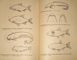 Říha Jaromír - Rybářské minimum