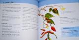 Wautersová Ambika - Homeopatie od A do Z
