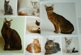 Behrendová Katrin - Kočka: Jak na to