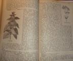 Das grosse illustrirte Kräuterbuch 1886