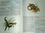 Červená kniha 2 - Kruhoústí, ryby, obojživelníci, plazi, savci