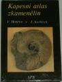 Javorek Vladimír - Kapesní atlas zkamenělin
