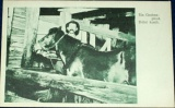 Hornictví - Důlní koník, Ein Grubenpferd