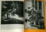 Skopec Rudolf - Dějiny fotografie v obrazech od nejstarších dob k dnešku