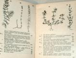 Faustus, Polívka - Botanický klíč