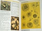 Böhm Čestmír - Okrasná zahrada a její rostliny