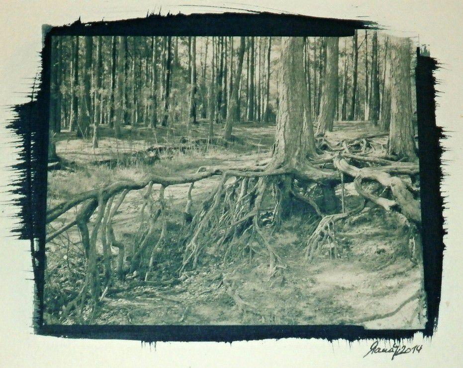 Pavel Manák - Treefolk - kyanotypie, tónováno černým čajem